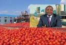 Dangote shuts new tomato paste plant